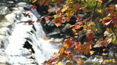 Falls foliage Stock Footage