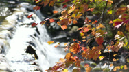 Stock Video Footage of falls foliage