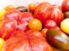 Stock Photo of heirloom tomato cultivars