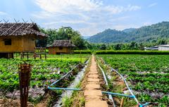 thai bamboo hut with old way. - stock photo