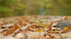 Person walking down nature trail - stock footage
