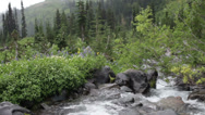 Stock Video Footage of High Alpine Forest River, Mount Rainier
