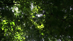 A low angle looking up at the forest canopy with sunlight coming through. - stock footage
