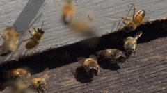 Honey bees at hive Slow Motion Stock Footage
