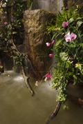 Water fall in garden Stock Photos
