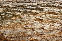 Bark background texture Stock Photos