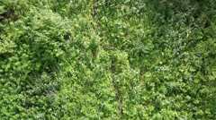 Beautiful vegetation on the hillside of mount shallow sinyuha. altai republic Stock Footage