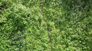 Stock Video Footage of beautiful vegetation on the hillside of mount shallow sinyuha. altai republic