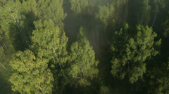Flight over the Mountains. Forest Valley. Morning Fog - stock footage