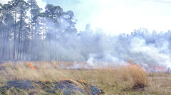 Close up of a prescribed grass burn on a powerline corridor through Moody Forest Stock Footage