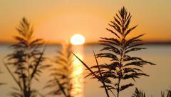 Sunrise seagrass Stock Footage