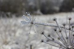 frozen flowers in winter close-up - stock photo