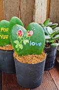 heart shaped plant (kerrii hoya) - stock photo