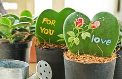 Heart shaped plant (kerrii hoya) Stock Photos