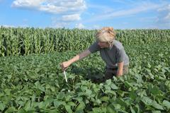 female agricultural expert inspecting quality of soy bean - stock photo