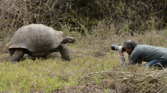 Photographer and an endemic Galapagos Giant Tortoise walking at Rancho El - stock footage