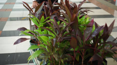 A man pushes a cart filled with small plants - stock footage