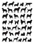 popular dog breeds - stock illustration