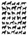 Stock Illustration of popular dog breeds
