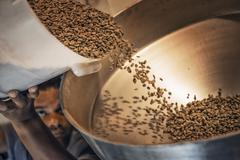 processing coffee beans for roasting and blending at a farm which imports cof - stock photo