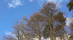 Autumn forest trees under deep blue sky in Switzerland, Europe Stock Footage