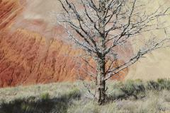 bare tree among volcanic (geological) landscape - stock photo