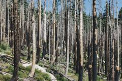 Aftermath of a forest fire, and new growth. Stock Photos