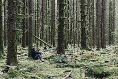 man sitting among moss-covered hemlock and spruce trees in lush temperate rai - stock photo