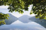 Stock Photo of big leaf maple tree framing lake crescent in calallam county, washington, usa
