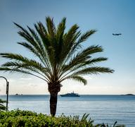 palmtree over blue sea and sky background - stock photo
