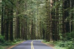 Road winding through the lush, temperate rainforest of the hoh rainforest in  Stock Photos