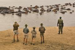 a walking safari party of people led by a guide ,watching a group of hippopot - stock photo