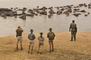 Stock Photo of a walking safari party of people led by a guide ,watching a group of hippopot