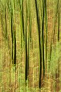 alder tree impression, big sur, california - stock photo