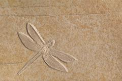 A complete dragonfly fossil on a smooth piece of stone. solnhofen, germany. Stock Photos