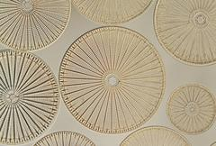 diatoms, farlow herbarium, harvard university - stock photo