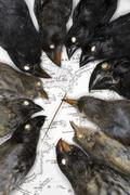 Darwin's finch specimens on map of galapagos islands, california academy of s Stock Photos