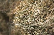 Stock Photo of close up of hay stalks in a bale. animal fodder and bedding for the winter mo