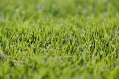 Freshly cut green grass, a dense carpet of grass blades, lying in one directi Stock Photos