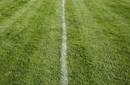 Stock Photo of white center line on freshly cut grass. a sports playing surface.