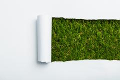 ripped paper on green grass background - stock photo