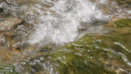 Stock Video Footage of Pure fresh water in forest