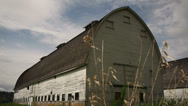 Stock Video Footage of Rustic Spring Barn, Sparrows, Wetlands