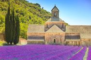 Stock Photo of abbey of senanque blooming lavender flowers. gordes, luberon, provence, franc