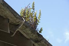 Fern growing in clogged mouldy unkept asbestos gutter Stock Photos