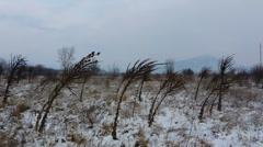 Winter 4K Stock Footage