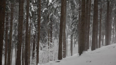 Heavy snowfall in a forest - HD1080p Canon 5DMkII Stock Footage