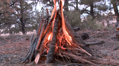 Close up of a campfire in a forest. Stock Footage