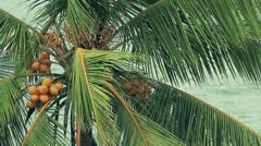 Palm tree Stock Footage