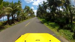 Driving through palm tree avenue Stock Footage